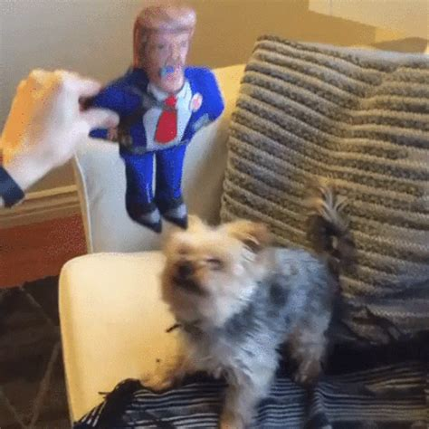 Dog Trump GIF - Find & Share on GIPHY