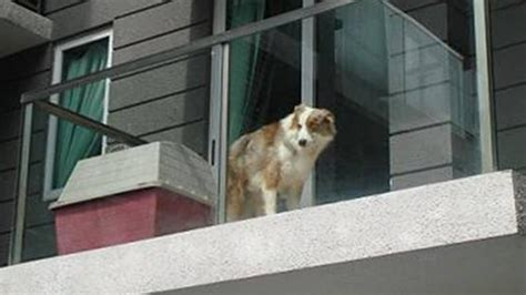 Man fined S$5,000 for confining dog to balcony